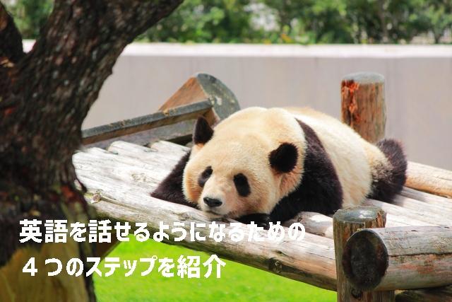 英語を話すための4つのステップのパンダの写真