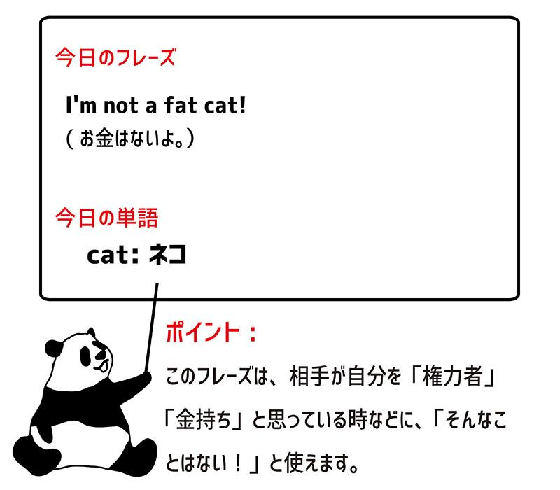 fat catのフレーズ