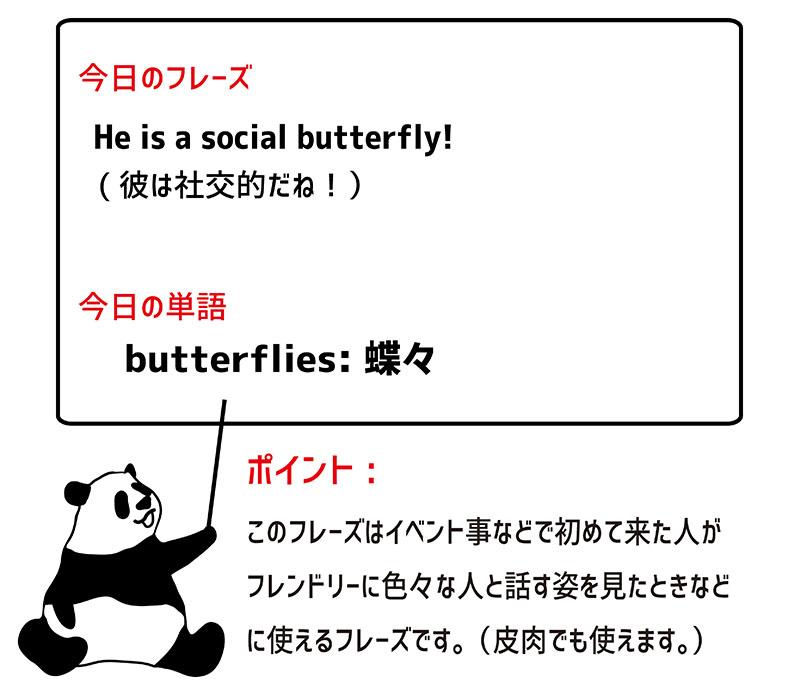 social butterflyのフレーズ