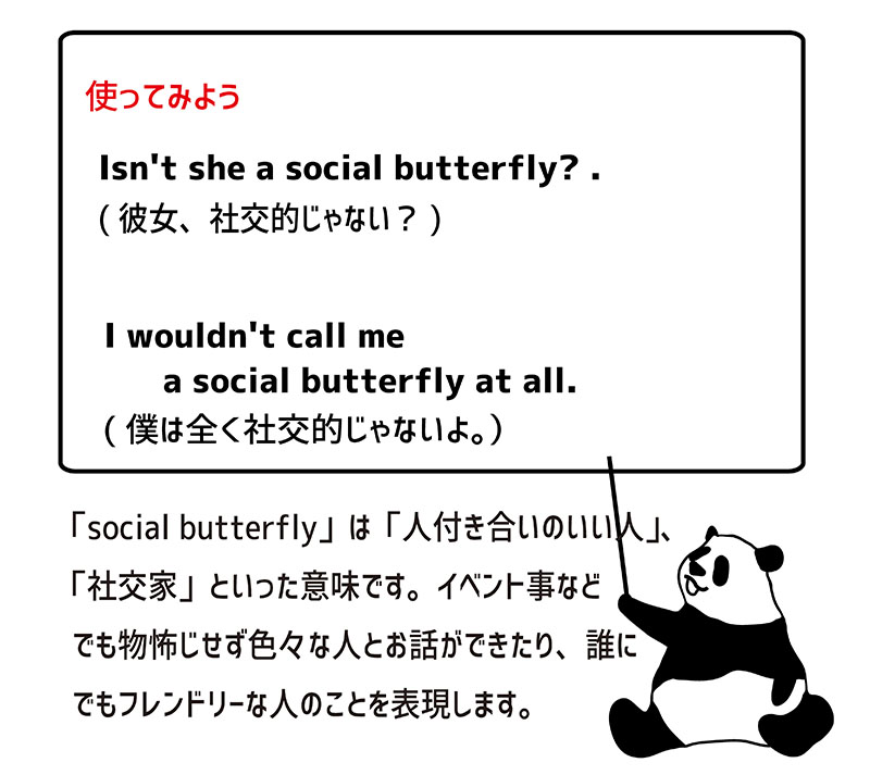 social butterflyの使い方
