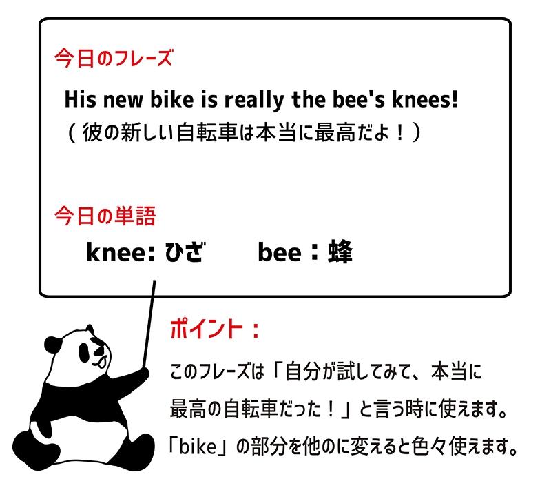 the bee's knees のフレーズ