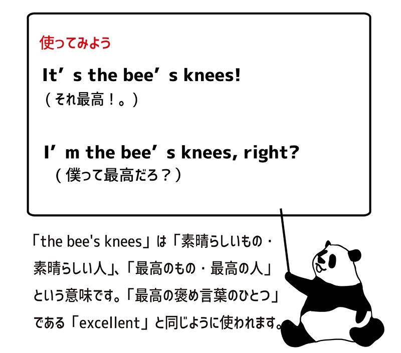 the bee's knees の使い方
