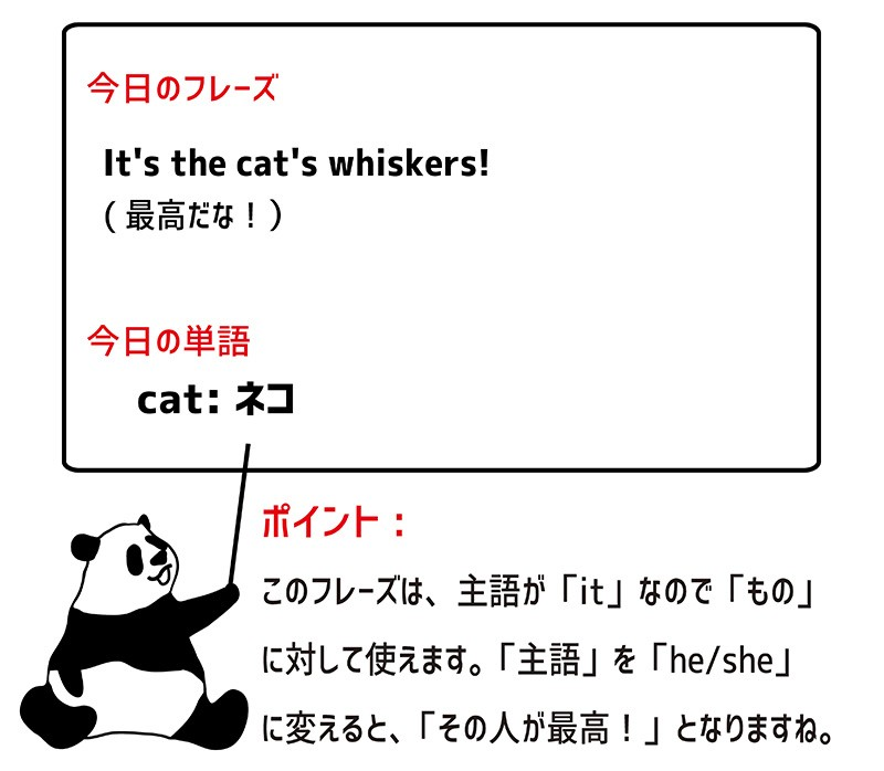 the cat's whiskersのフレーズ