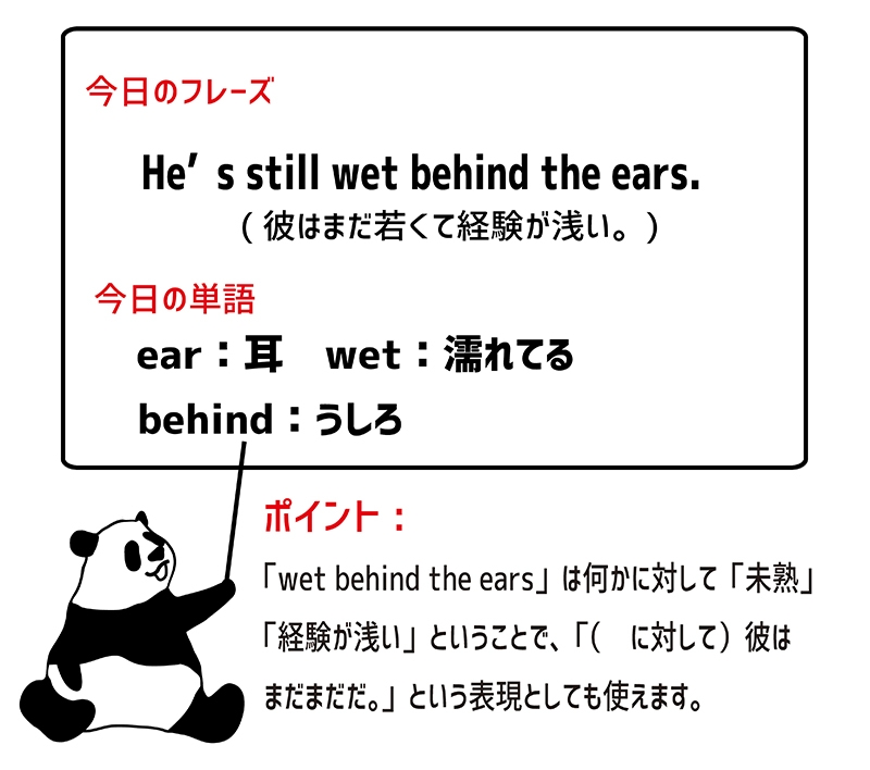 wet behind the earsのフレーズ